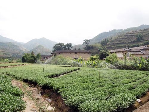 福建土楼と茶畑